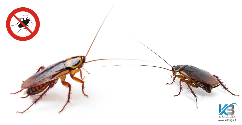 Scheda animale infestante: Mangiapane nelle cucine | Kill ...